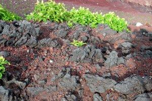 Цветы на вулканической почве