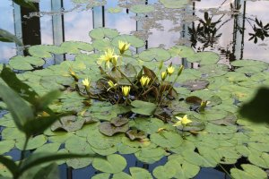 The pool covered water lilies