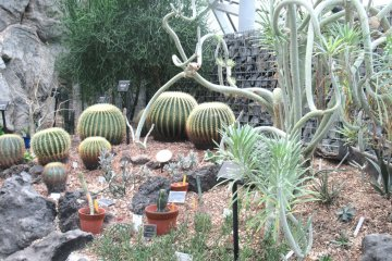 Cacti corner