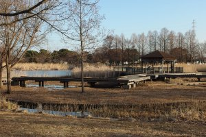 Even in winter, the expanse of Toneri Park can't be ignored