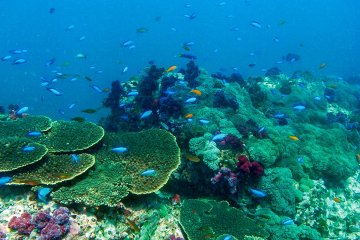 Nobeoka has the best scuba diving and snorkeling in Kyushu with its coral reefs