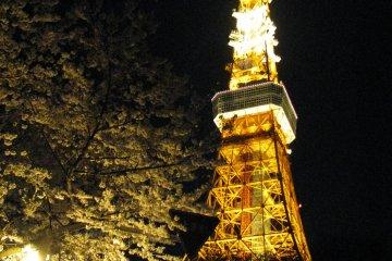 Токийская башня и сакура