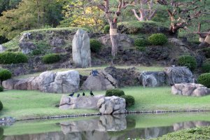 In Rikugien Garden, karasu were the 'hosts'