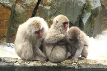 Monkeys up close - how exciting!