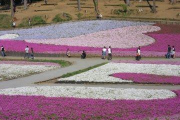 Hitsujiyama Park in spring