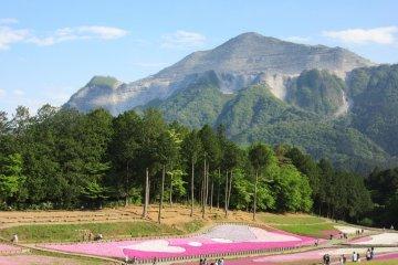 Hitsujiyama means 'sheep mountain'