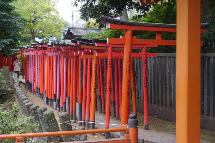Nezu Shrine\'s famous red torii gates