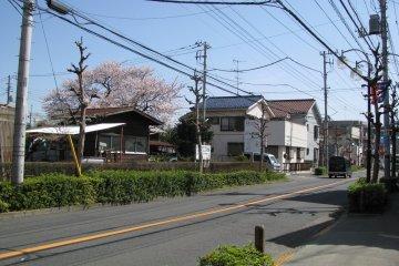 A fine spring morning in Higashi-Koganei