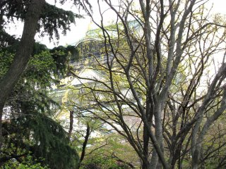 Osaka Castle is surrounded by trees