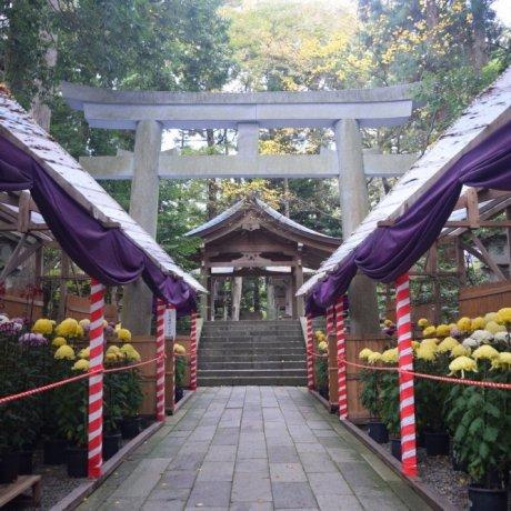 Yahiko Chrysanthemum Festival