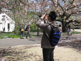 Сакура цветёт каждый год, и всё равно вдохновляет фотографов!