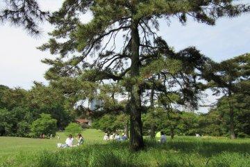 Парк Йойоги в Токио