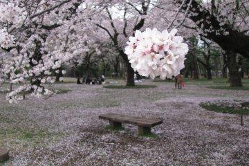 Парк Коганэй в Токио