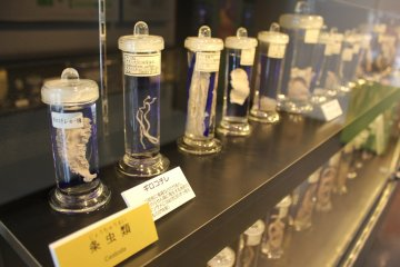 Creepies from the Meguro Parasitological Museum