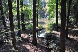 The natural world of Rinshi no Mori