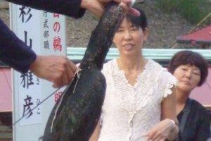 Cormorant on the Kiso