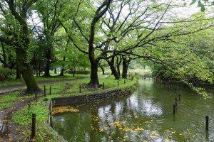Relaxing waterside experience at Zenpukuji Park
