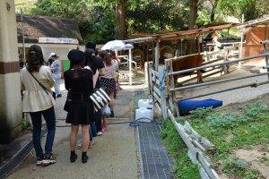 赤ちゃん牛の授乳体験を待つ人たちの列