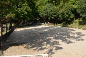 木曽馬の乗馬体験のパドック