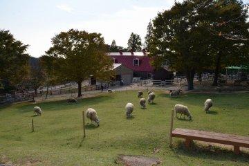 神戸 「六甲山牧場」