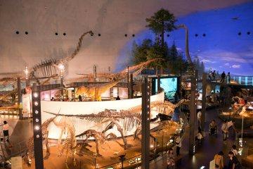 Sala principal de la exhibición - Museo de los Dinosaurios de la prefectura de Fukui