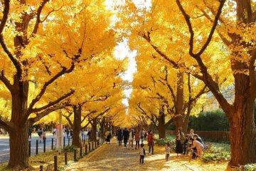 Meiji Jingu Gaien during autumn, right by Niko Niko Park