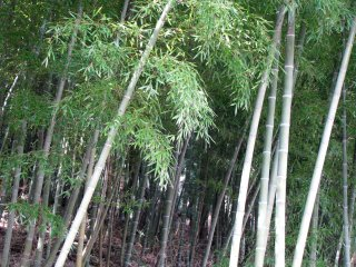 Bamboo, or take, is the symbol of eternal youth and strength