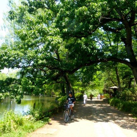 Tokyo's Nerima City Ward