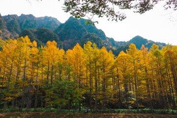 ทางเดินสายธรรมชาติที่อยู่ท่ามกลางใบไม้สีเหลือง