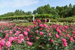 Jindai Botanical Gardens, Chofu City