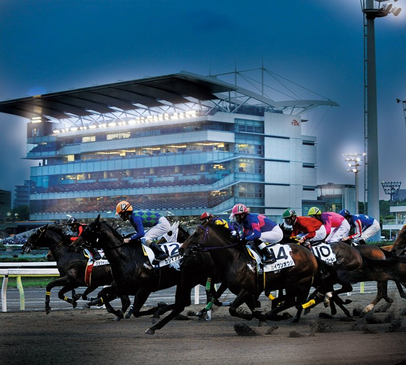 Enjoy the Twinkle Horse Races!