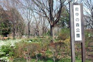 Fuchu no Mori Park, Fuchu City