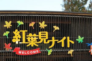 Koyo night ~ Fall foliage night