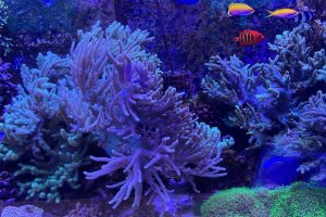 Coral and tropical fish