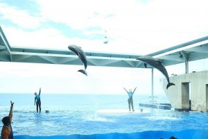 As are the dolphin shows
