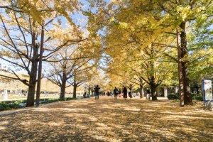 Showa Memorial Park, Tachikawa City