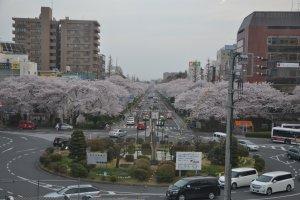 Daigakudori University Street, Kunitachi City