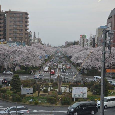 Tokyo's Kunitachi City