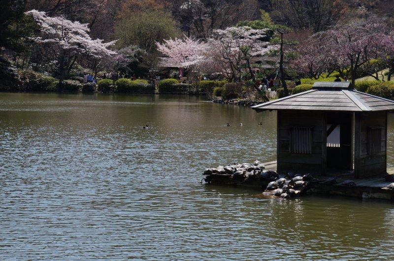 Yakushi-ike Pond, Machida City