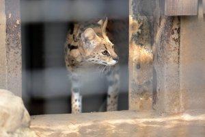 Hamura Zoo, Hamura City