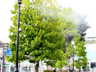 The water spray attached in each tree gives a cool and refreshing feeling to travelers amidst the extreme afternoon heat.