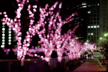 Pretty pink illuminations at Meguro River