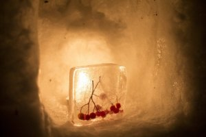 Snow and Ice play together in front of the candle light
