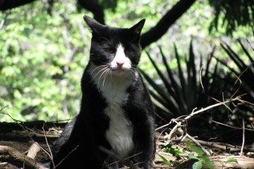 Нэко или японские кошки