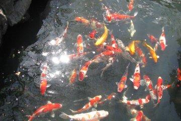 Значение рыбы в Японии