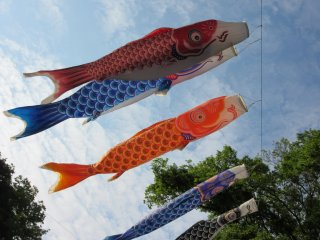 'Koinobori' are traditional decorations for the holiday Kodomo-no-hi