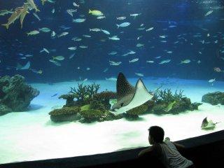 В аквариуме много удивительного!
