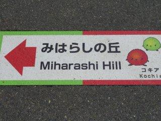 Meski bagian depan tamannya yang luas sangatlah bagus, orang-orang langsung mencari bukit Miharashi di mana padang kochia berada