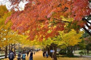 Tachikawa City, Tokyo