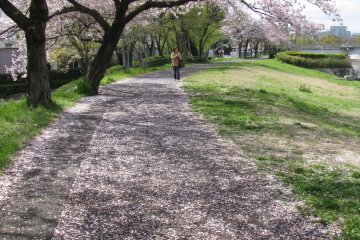 Парк вдоль реки